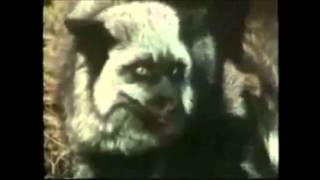 how animals mate ep  2 dog/foxes/wolves and polar bears mating montage