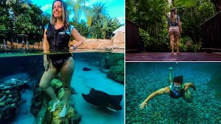 Discovery Cove | All inclusive Day Resort | Snorkeling the Grand Reef with Stingrays & Tropical Fish