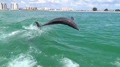 Little Toot Dolphin Tour at Clearwater Beach