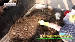 СУБСТРАТ для ВЕШЕНКИ видео ЮТУБ - технология производства грибов(Как правильно организовать работу по набивке и изготовлению грибных блоков вешенка можно увидеть очень..., 2014-10-16T04:00:03.000Z)