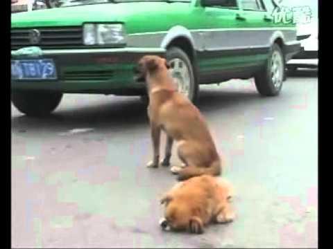 Con chó nhất định không bỏ bạn - VnExpress.mp4