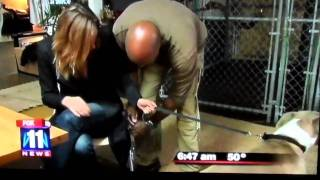 Los Angeles Dog Aggression Expert - Rehabilitating Aggressive Dogs And Training Owners