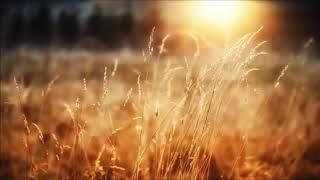 AMADORI - Sunshine after the rain