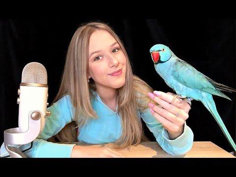 ASMR but my bird gives you tingles