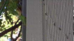 Pest Control Services - Portland Oregon Vancouver Washington