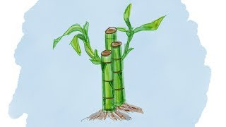 How to draw lucky bamboo - Easy Cartoon Step by Step Tutorials for Kids