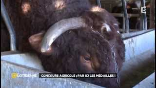 Du haut de sa tonne et demi, Fêtard le taureau brigue une médaille au concours général agricole 2014