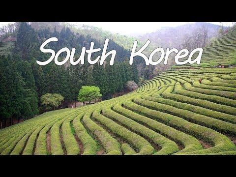 SOUTH KOREA TRAVEL GUIDE- BOSEONG TEA PLANTATION