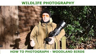 How to photograph woodland birds.