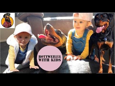 Are Rottweiler's good with Kids? Hindi Vlog | best guard dog |बच्चों के साथ rottweiler