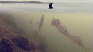 видео Зимняя рыбалка: ловля окуня на мормышку