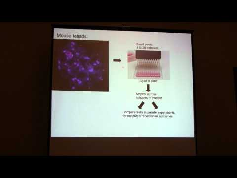 Francesca Cole: Mechanisms and distribution of gene conversion in mouse meiosis