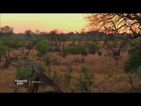 Botswana, intense et sauvage - Échappées belles
