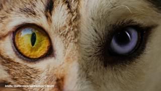 Jak widzą zwierzęta? Zobacz świat ich oczami!