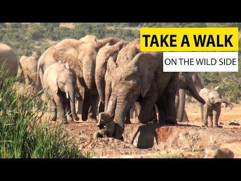 Take A walk On The Wild Side || JukinVideo