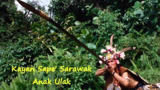 Kayan Sape Sarawak Anak Ulak