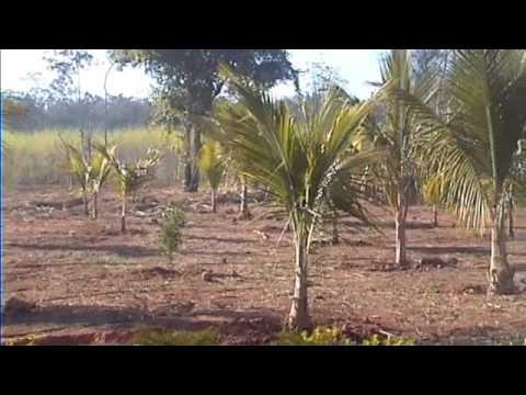 Fazenda Mandacaru