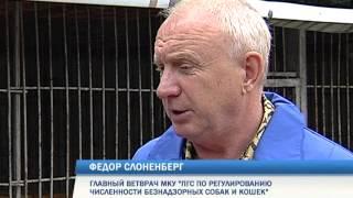 В Перми стартовал массовый отлов бродячих собак