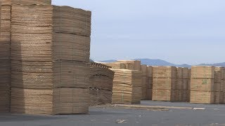 New Chinese tariff boosts local timber industry