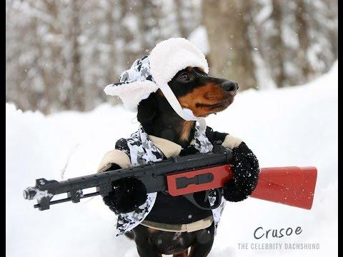 Huntin' Dog Part 2 - WABBIT SEASON - Crusoe Dachshund
