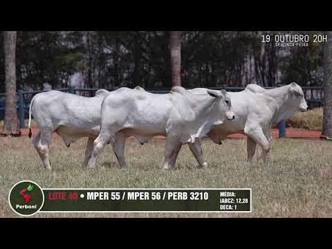 LOTE 40   PERB 3210, MPER 55,56