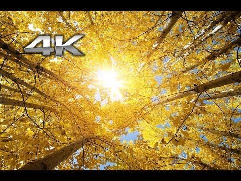 """2 HRs 4K: """"Fall in the Forest"""" Nature Relaxation™ Video + Instrumental Music UHD"""