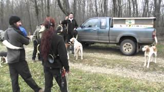 chasse a courre sur lievre sur notre commune