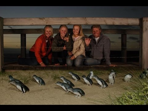 Phillip Island Penguin Parade and Australian Wildlife Experiences around Melbourne