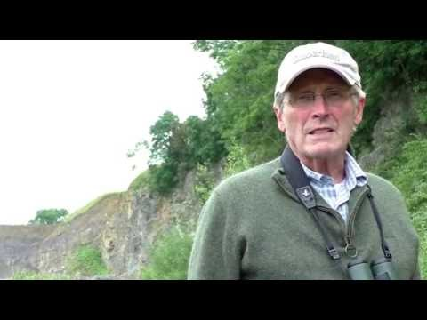 PEREGRINE FALCON PERSECUTION - DRIVEN RED GROUSE SHOOTING