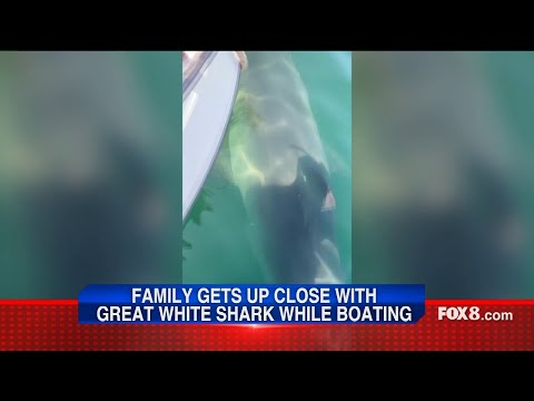 Wendy - Mass Woman Says Great White Got A Little Too Close For Comfort