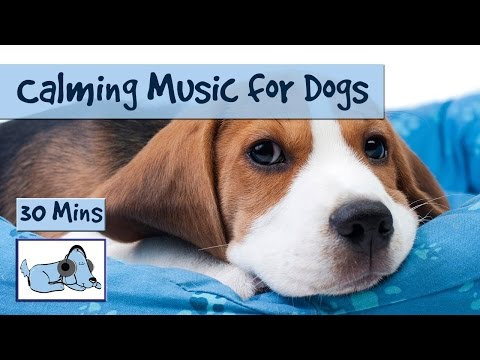 Calming Music, Relaxing Sounds for Dogs