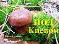 Где растут польские грибы 2018 mp3
