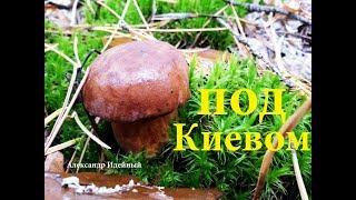 видео Польский гриб