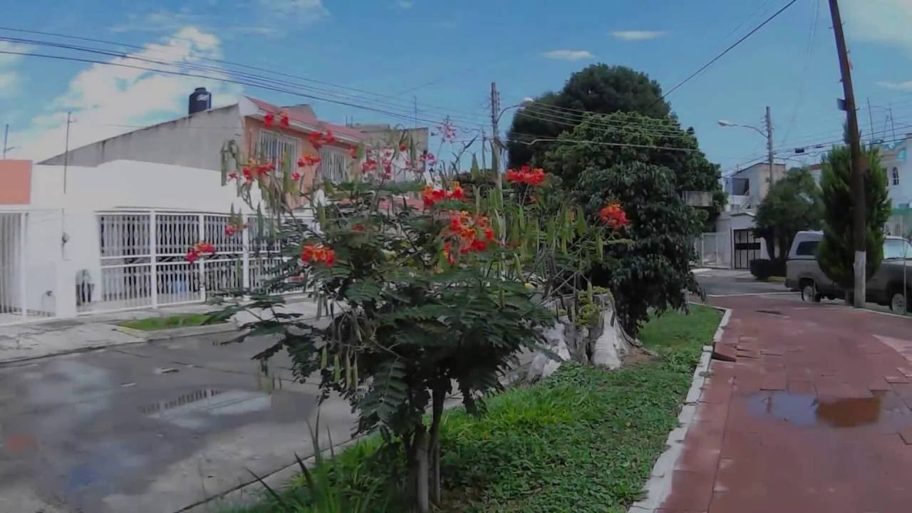 Suburb in flowers gardening flower and vegetables small delonix regia with flowers youtube izmirmasajfo