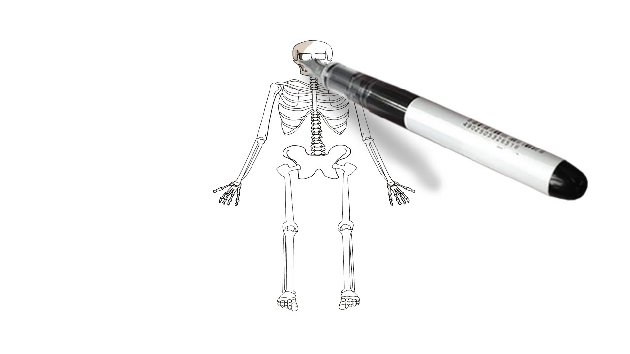 How To Draw Full Body Human Skeleton Drawing For Kids Step By Step