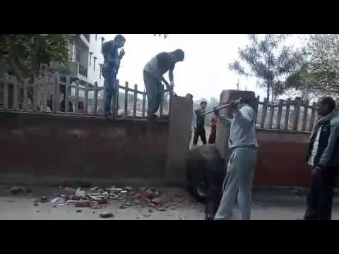 Animal rescue while stuck in narrow walls in India with local feat