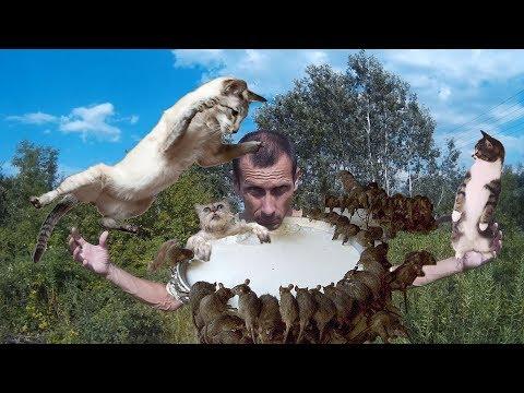 Город Котов. Рай для Кошек и Любителей Котят. Змеи, ежи, собаки Переезд Краснодар ПМЖ