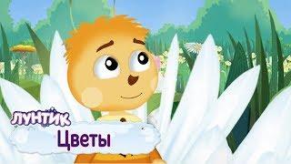 Download Цветы 🌸 Лунтик 🌺 Сборник мультфильмов 2019 Mp3 and Videos