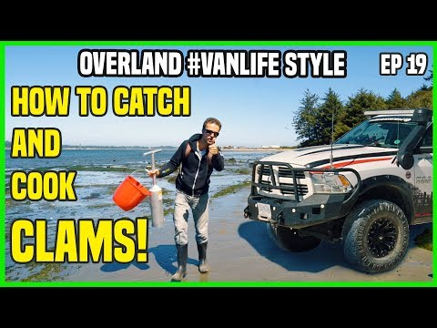 how-to-catch-and-cook-clams-|-overland-camping-van-life-style-|-ep19