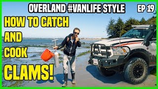 How To Catch And Cook Clams | Overland Camping Van Life Style | ep19