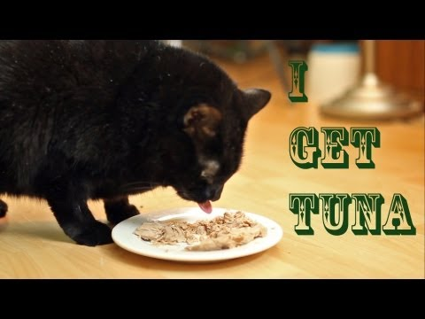 I Get Tuna (Official Music Video) - N2 the Talking Cat