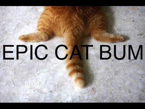 Kitty cat fart