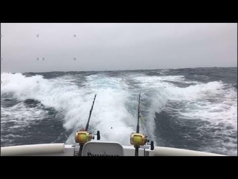 Game Fishing Trip In New Zealand  - Primetime