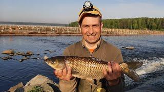 Супер рыбалка Карпы и белые амуры на поплавочную удочку