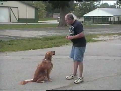 Enjoying our dogs doing tricks - Riju Dawg Skool