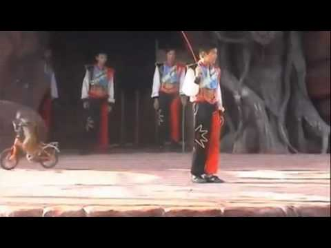 Shocking Chinese Circuses Inflict Animal Cruelty