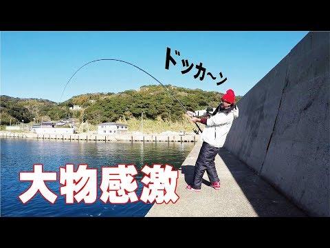 �驚愕】湾内アジ�泳��釣り���ら��キタ
