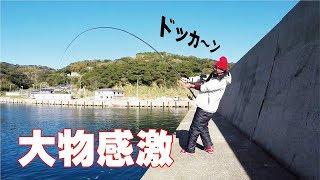 【驚愕】湾内アジの泳がせ釣りにどえらいのキタ thumbnail