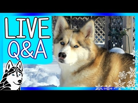 Previously LIVE Q&A with the HUSKIES of Gone to the Snow Dogs | 5pm EST