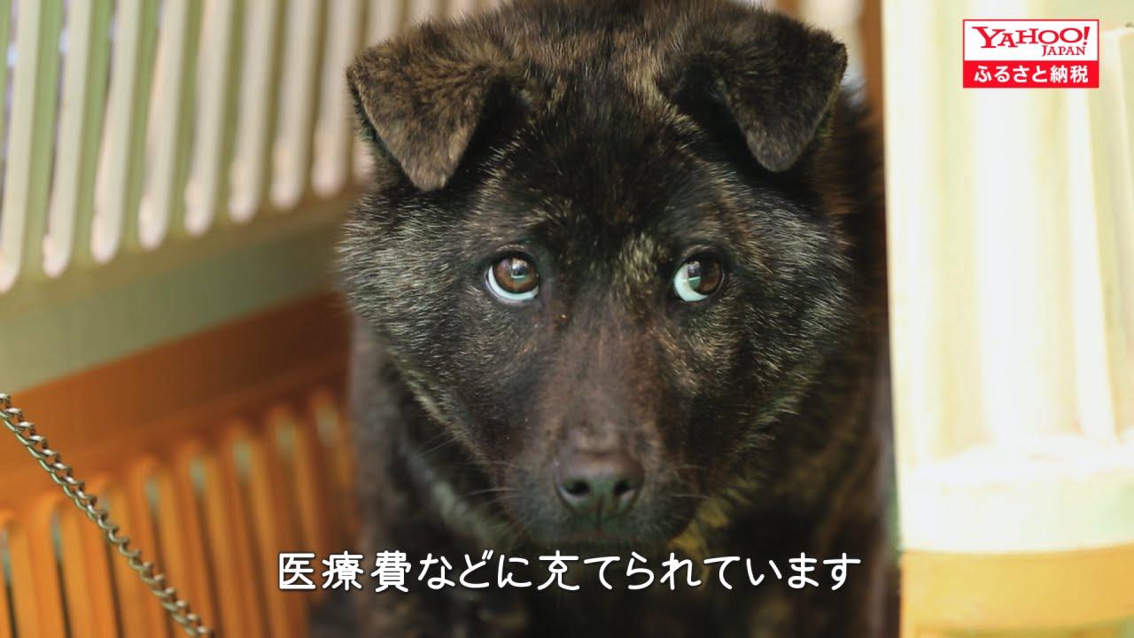 犬猫の殺処分ゼロへの誓い 福岡市 Youtube